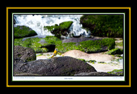Yellow Warbler V (13x19)