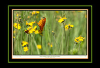 Great Spangled Fritillary and European Skipper (13x19)